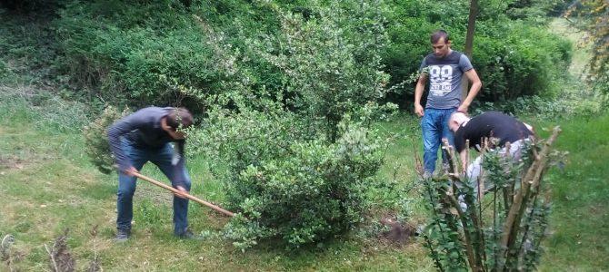 Zdjęcie do koła ogrodniczego